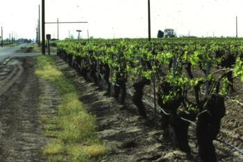 Drip irrigation system in a vineyard.  Photo:  L Schwankl